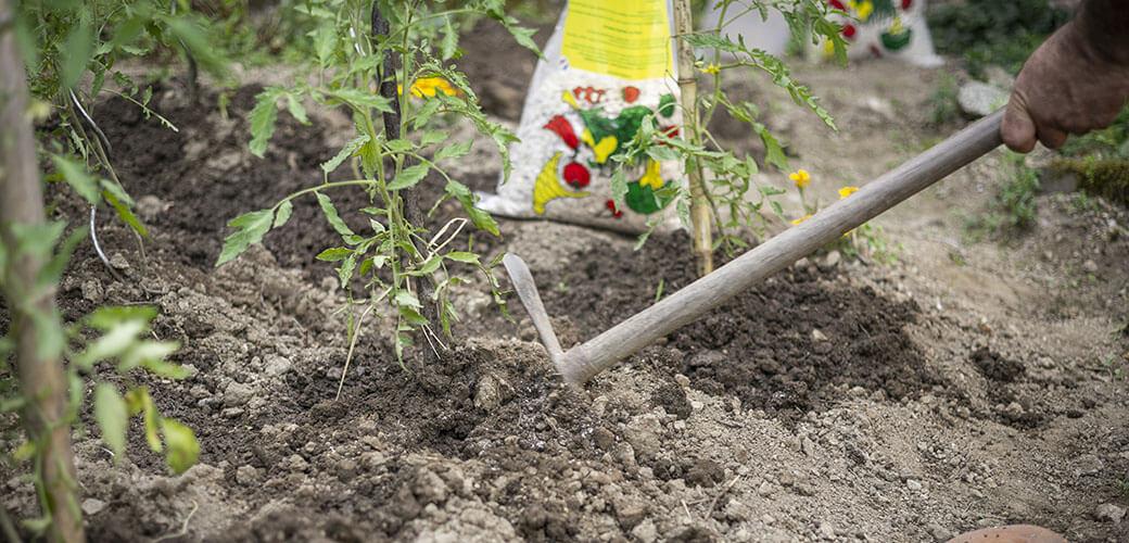 Préparation des sols avec de l'engrais de corne broyée